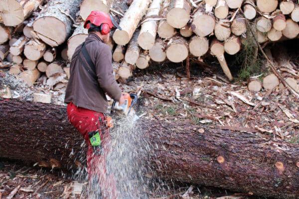 Symbolbild Forstunternehmer bei der Arbeit
